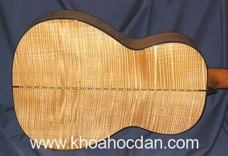 Ảnh hưởng của gỗ tới chất lượng đàn guitar(p1.)